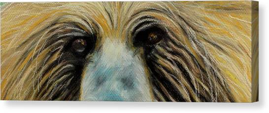 Grizzly Eyes Canvas Print