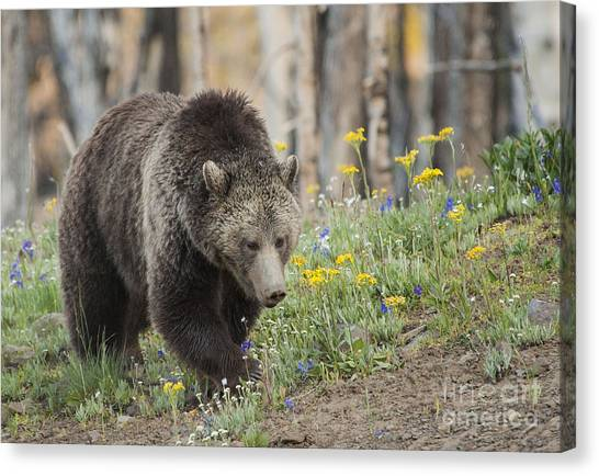 Grizzly In Spring Flowers Canvas Print by Bob Dowling