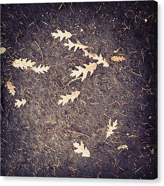 Roads Canvas Print - Ground Cover by Nic Squirrell