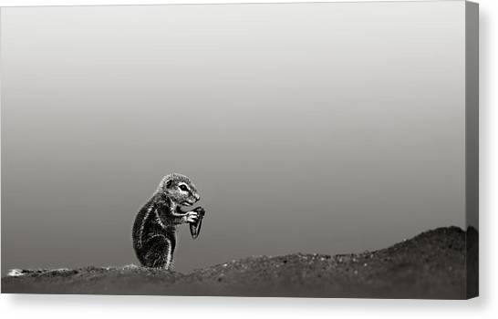 Squirrels Canvas Print - Ground Squirrel by Johan Swanepoel