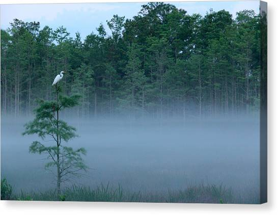 Grounded Egret Canvas Print