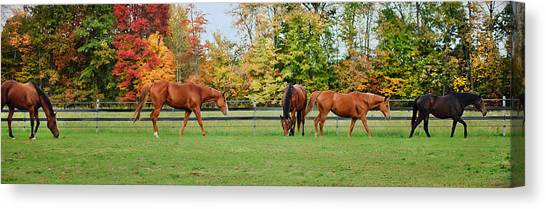 Canvas Print featuring the photograph Group Activity by Kristi Swift