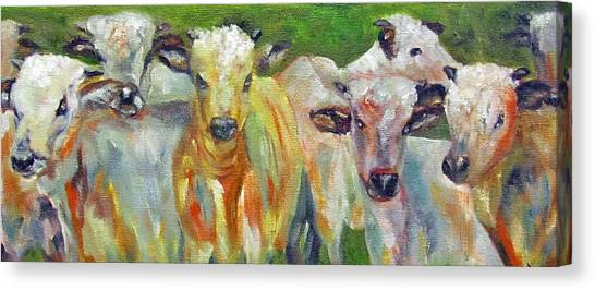 The Gathering, Cattle   Canvas Print