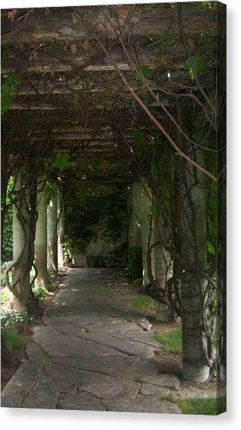 Grove Canvas Print - Grove by Terry Pelch