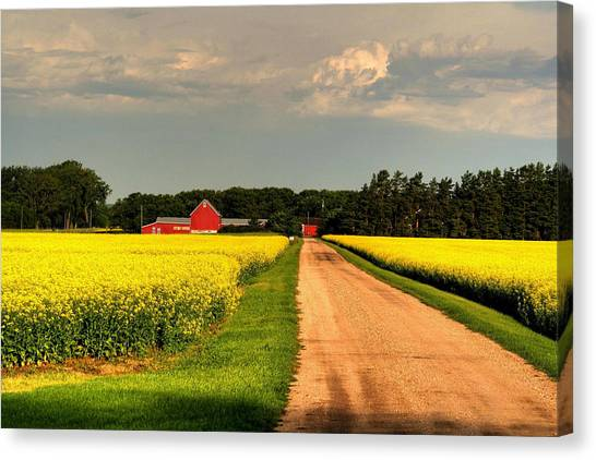 Growing For Gold Canvas Print