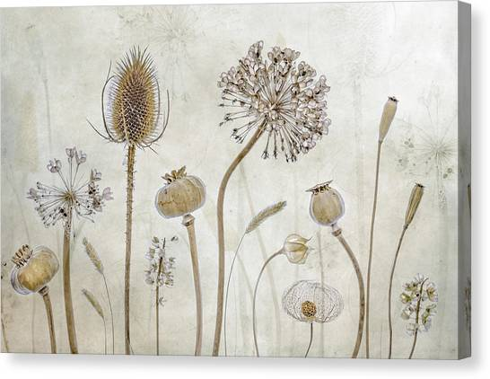 Head Canvas Print - Growing Old by Mandy Disher