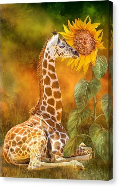 Growing Tall - Giraffe Canvas Print