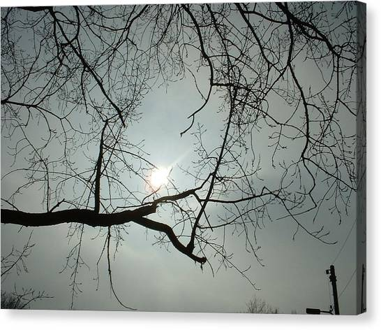 Grown In Cold Light Canvas Print