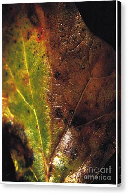 Growth-leaf Canvas Print