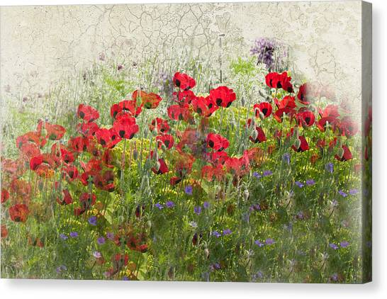 Grunge Poppy Field Canvas Print by Lesley Rigg
