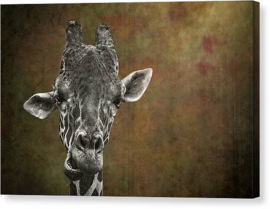 Grungy Giraffe 5654 Brown Canvas Print