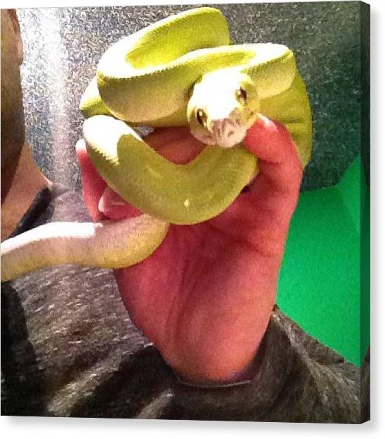 Pythons Canvas Print - #gtp #greentreepython #pet #python by Jordan Marcia