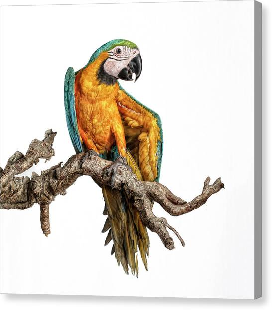 Macaw Canvas Print - Guacamayo by Silversaltphoto.j.senosiain
