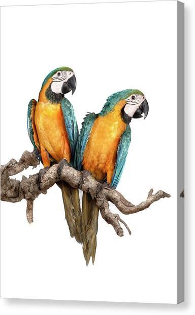 Macaw Canvas Print - Guacamayos-11-120812 Copia by Silversaltphoto.j.senosiain