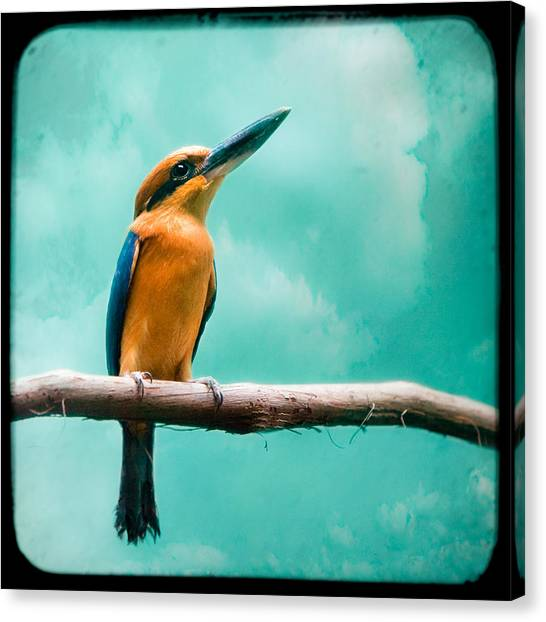 Guam Kingfisher - Exotic Birds Canvas Print