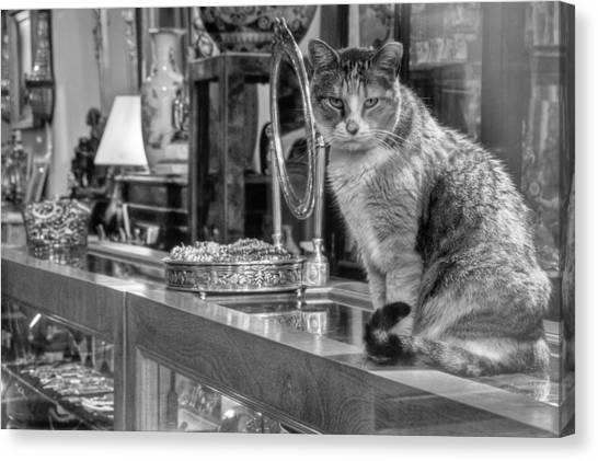 Guard Cat Canvas Print