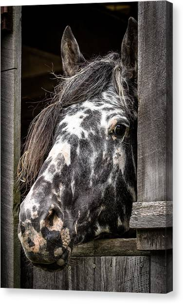 Guard Horse-what's The Password? Canvas Print