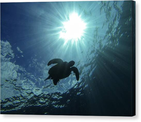 Turtles Canvas Print - Guardian Of The Sea by Brad Scott