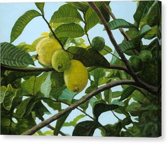 Guava Canvas Print