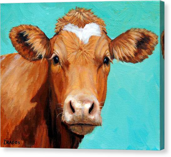 Cow Canvas Print - Guernsey Cow On Light Teal No Horns by Dottie Dracos