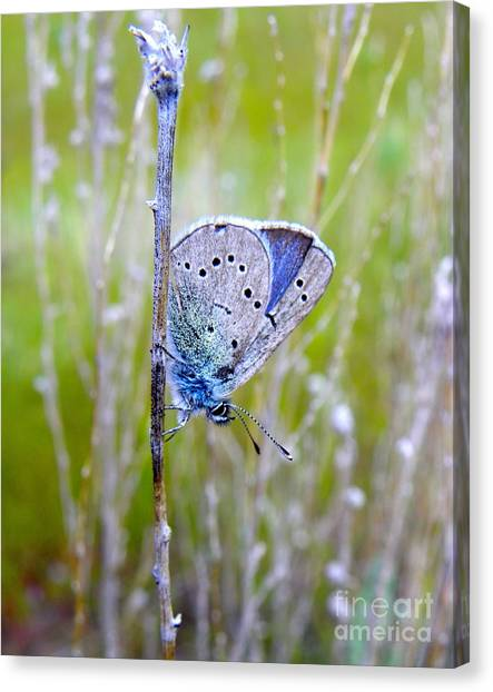Guilded Blue Canvas Print