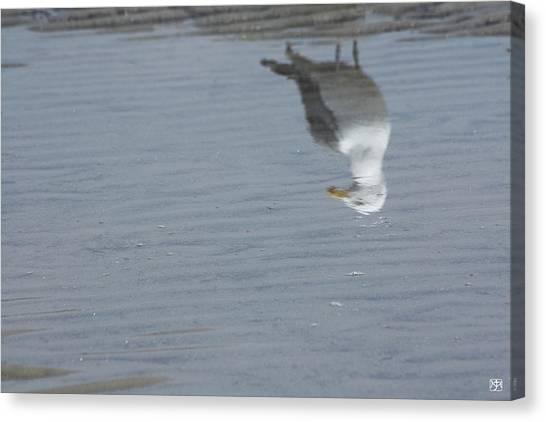 Gull At The Beach Canvas Print