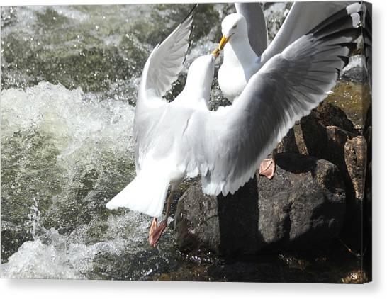 Gull Greeting Canvas Print