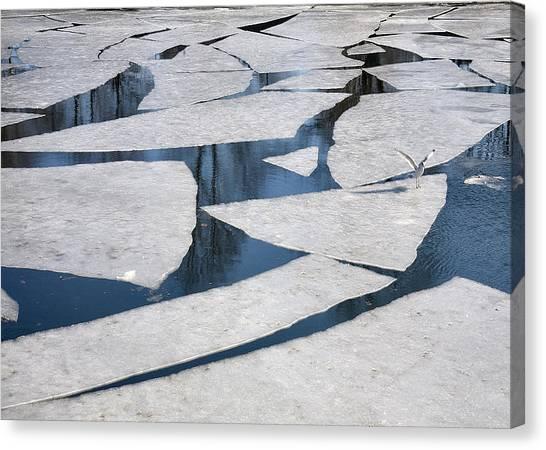 Gull On Ice Canvas Print