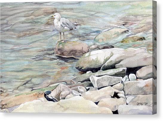 Gull On The Rocks Canvas Print