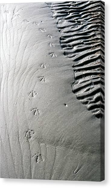 Gull Prints Canvas Print