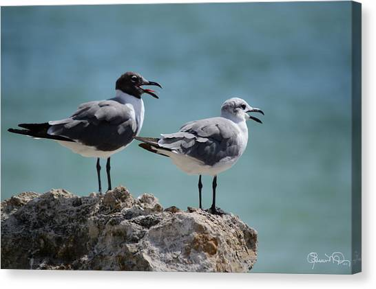 Gull Talk Canvas Print