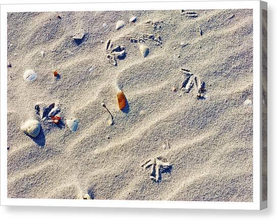 Gull Tracks Canvas Print
