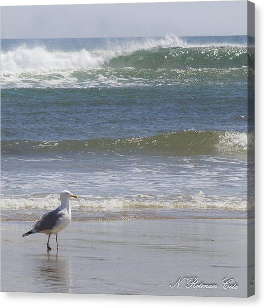 Gull With Parallel Waves Canvas Print