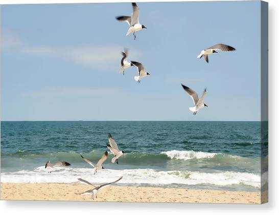 Gulls A Dance'n Canvas Print
