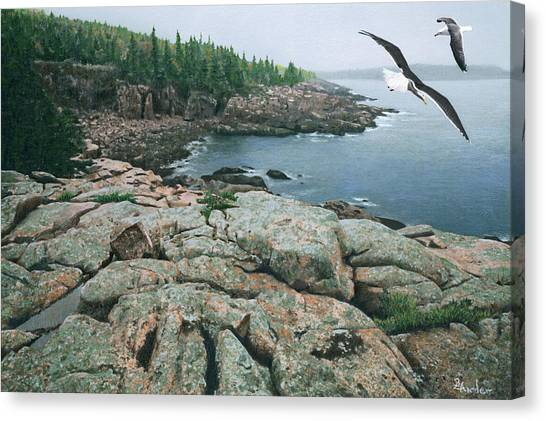 Gulls At Monument Cove Canvas Print