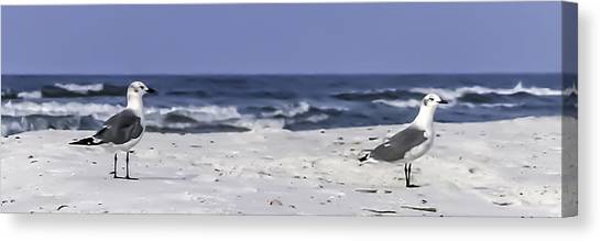 Gulls By The Sea Canvas Print by CarolLMiller Photography