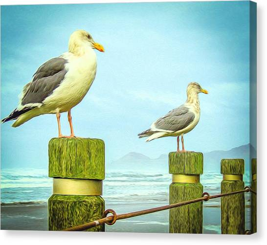Gulls Canvas Print by Denise Darby