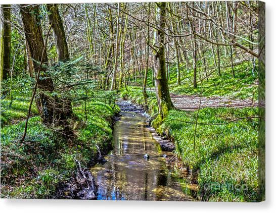 Gweek Woods Canvas Print