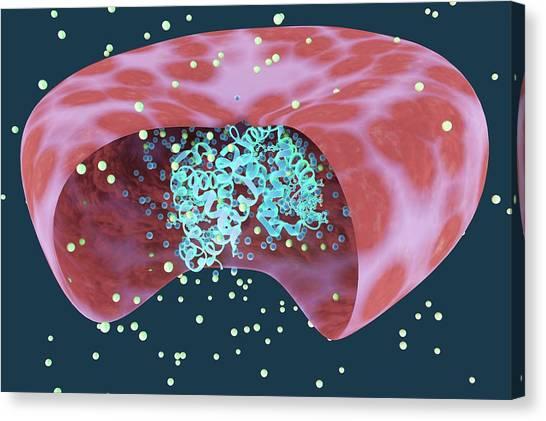 3d Visualization Canvas Print - Haemoglobin Protein by Ella Maru Studio / Science Photo Library