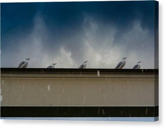 Hailstorms Canvas Print - Hailstorm At The Gold Coast by Jukka Heinovirta