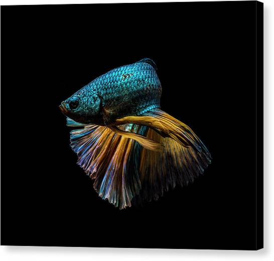 Elegance Canvas Print - Half Turn by Andi Halil