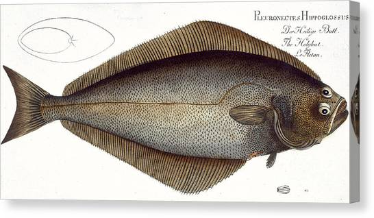 Angling Canvas Print - Halibut by Andreas Ludwig Kruger