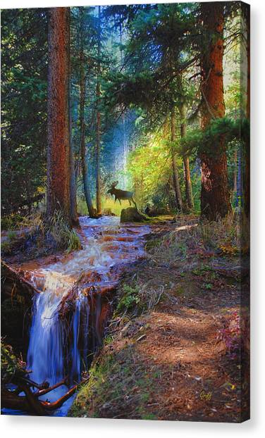 Hall Valley Moose Canvas Print