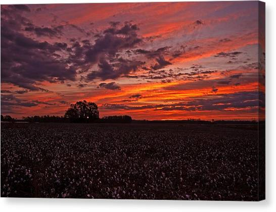 Halloween Dawn  Canvas Print
