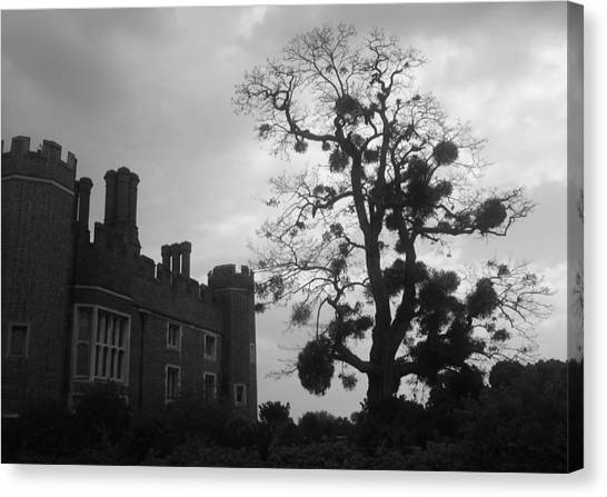 Hampton Court Tree Canvas Print