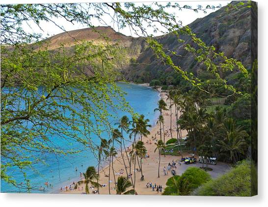 Hanauma Bay Nature Preserve Beach Through Monkeypod Tree Canvas Print