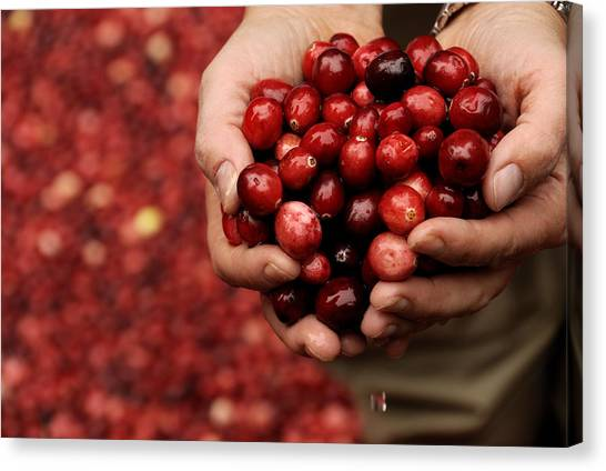 Handful Of Fresh Cranberries Canvas Print