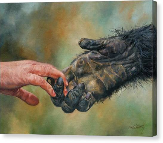 Apes Canvas Print - Hands by David Stribbling