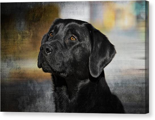 Handsome Black Lab Canvas Print