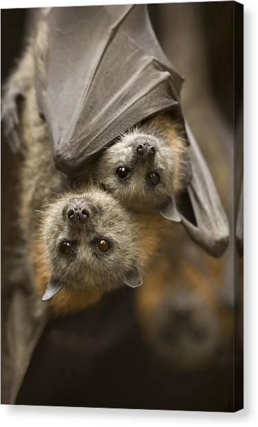 Bat Canvas Print - Hang In There by Mike  Dawson